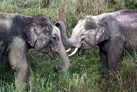 photo:www.elephants.net