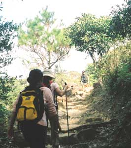 One of the trails up Tai Mo Shan