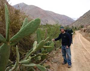 Cacti dot the Elqui's dry landscape.