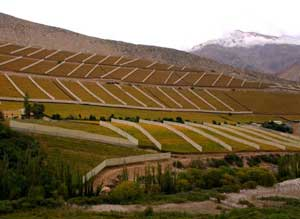Pisco grape plantations color the valley's mountainsides.