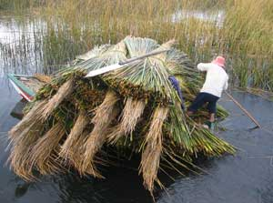 Gathering reeds for building boats and houses