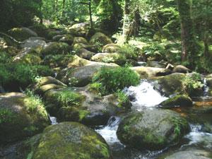 Dartmoor is one of the last wilderness areas in the UK