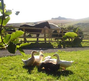Holwell Farm in Dartmoor