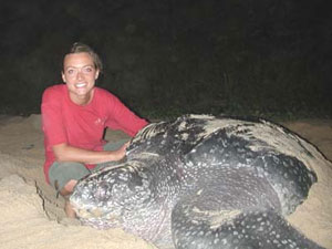 Nature Seeker volunteer Gretchen Luna with a laying leatherback turtle named Sammy. Photos by Ginger Warder