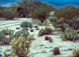 The abundant vegetation at Vallecito attracts a variety of wildlife.
