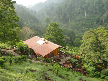 Cozy hut in the jungle where TAMF volunteers live.