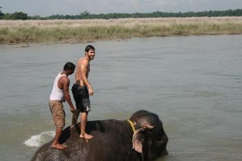 Washing an elephant in Nepal. Nick Round photo.