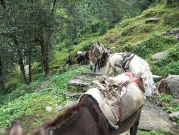 Horse trekking in Nepal's Chitwan National Park. Nick Round photos.