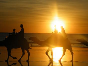 camel-on-beach