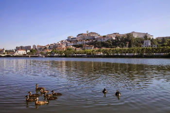 Ducks in Coimbra. Paul Shoul photo.