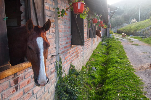 At the horsebarn of Hacienda Caballo in Cuenca.