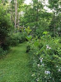 LaTourelle Forest Trail