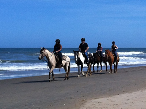Horses on Virginia Beach