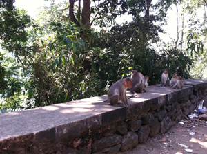 Monkeys by the roadside.