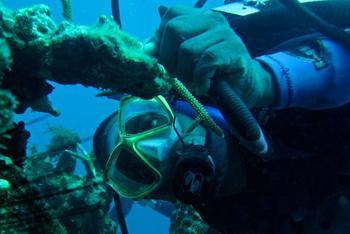 Ratty checking the coral garden
