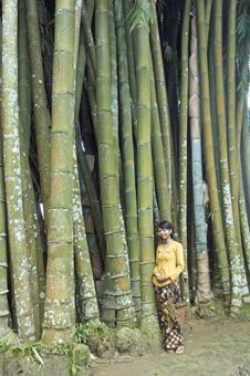 The Losari coffee plantation bamboo