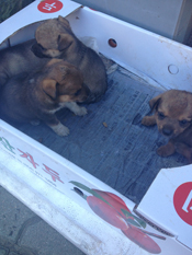 A woman sat with a box of puppies among others selling clothing on the streets of Waegwan