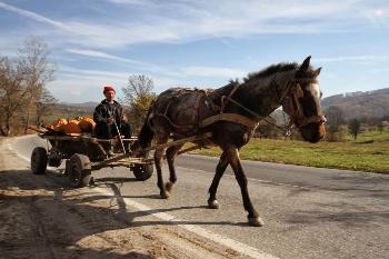 Romanian horse cart.