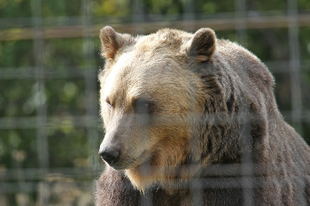 A bear at the sanctuary.