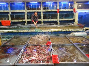 A seafood market in Shenzhen,China. Darian Gier photo.