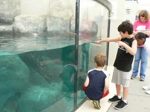 checking out seals at vb aquarium