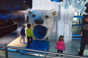 the kids polar bear play area