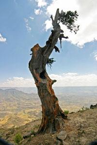 Deforestation induces erosion.