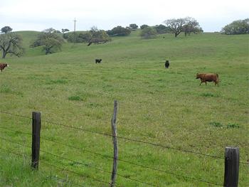 Solvang, California greenery as seen by bike.