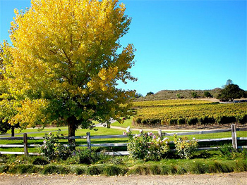 Wine country in Solvang, California.