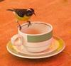 A sugar bird in Nevis