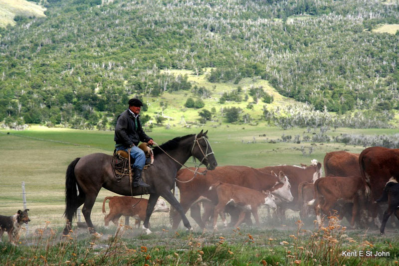 A rancher in Patagonia
