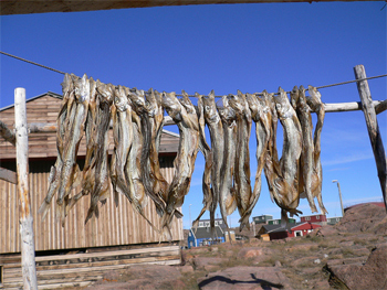 Fish is  what sled dogs are fed in Greenland.