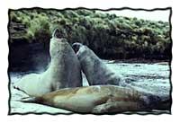 The Falkland Islands (The Malvina Islands): GoNOMAD DESTINATION MINI GUIDE