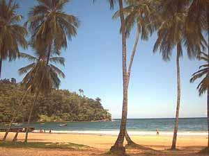 A shady beach in Trinidad. photo: Nadia Ali