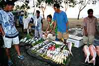 Fish for sale at Dili's waterfront.