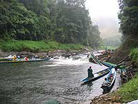 Longboats wait their turn to run the rapids of the Sumpah River.