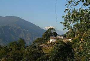 View of Karmi Farm with the Himalayas in the distance. Photos by Partha De Sarkar.