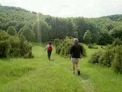 Hiking the lush Jewish Meadow, in the Bukk Upland region. photo by Max Hartshorne.