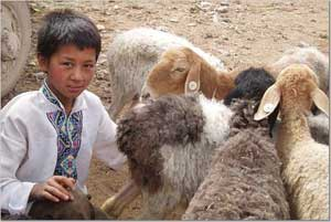 A young boy tends his flock.