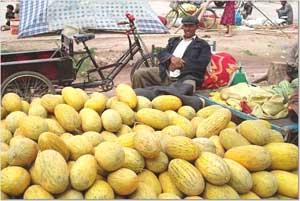 A melon vendor