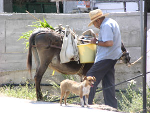 A man with his donkey and his dog in northern Crete