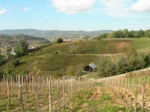 Croatia has more than 300 wine regions. Photos by Kent St. John