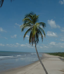 The gorgeous stretch of Pacific beach at the resort Barcelo Montelimar. Photos by Barb Sprangers