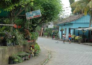 The town of Catarina is a veritable botanic garden for sale.