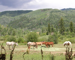 These horses are used for riding lessons at the Perry-Mansfield Performing Arts Camp.