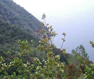 Mountains in Cinque Terre