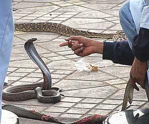 A snake charmer in Marrakech - photos by Kent E. St. John