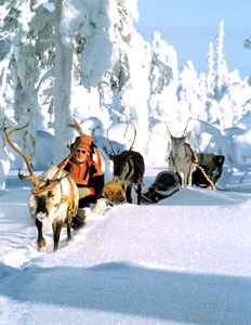 Riding in a reindeer sleight
