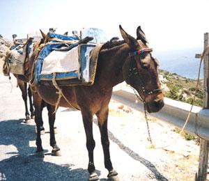 A working donkey