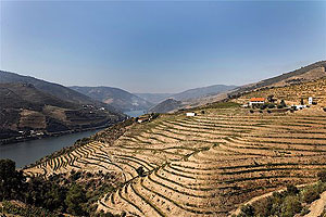 The terraces of the Douro River Valley